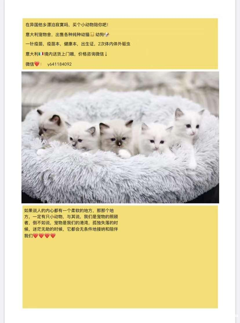 出售纯种幼猫幼犬